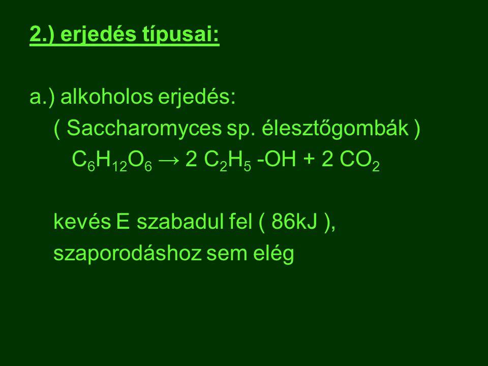 2.) erjedés típusai: a.) alkoholos erjedés: ( Saccharomyces sp. élesztőgombák ) C6H12O6 → 2 C2H5 -OH + 2 CO2.
