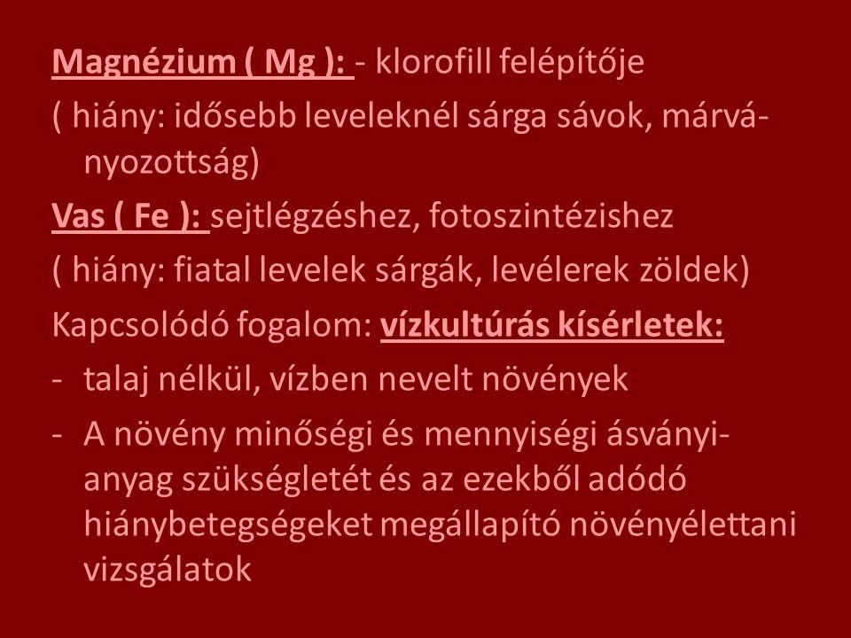 Magnézium ( Mg ): - klorofill felépítője
