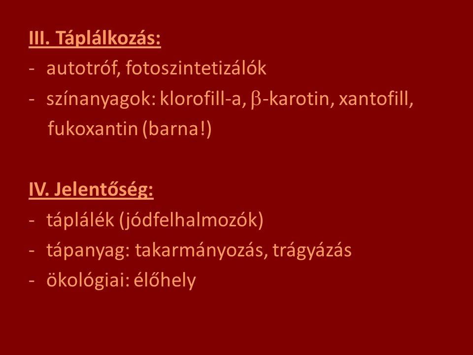 III. Táplálkozás: autotróf, fotoszintetizálók. színanyagok: klorofill-a, -karotin, xantofill, fukoxantin (barna!)