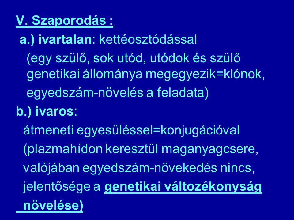 V. Szaporodás : a.) ivartalan: kettéosztódással. (egy szülő, sok utód, utódok és szülő genetikai állománya megegyezik=klónok,