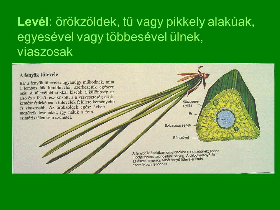 Levél: örökzöldek, tű vagy pikkely alakúak, egyesével vagy többesével ülnek, viaszosak