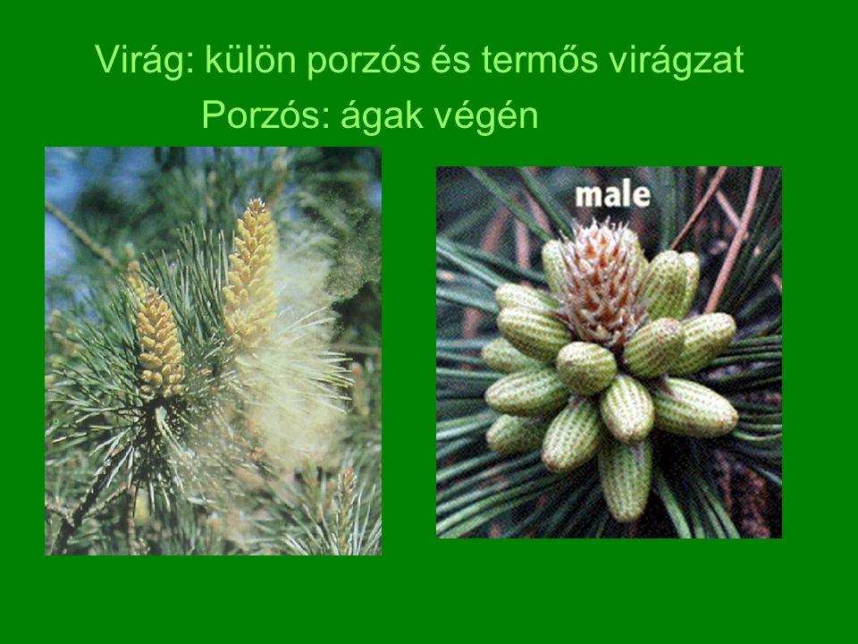 Virág: külön porzós és termős virágzat