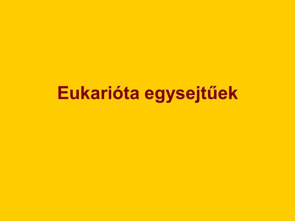 Eukarióta egysejtűek