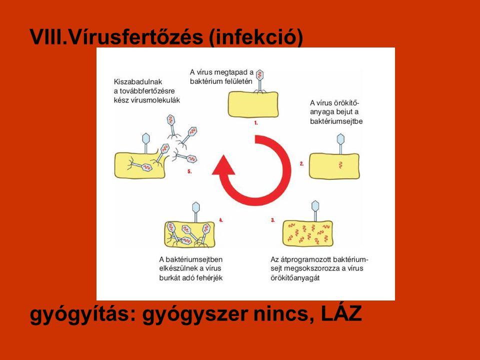VIII.Vírusfertőzés (infekció)
