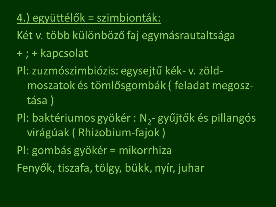 4. ) együttélők = szimbionták: Két v