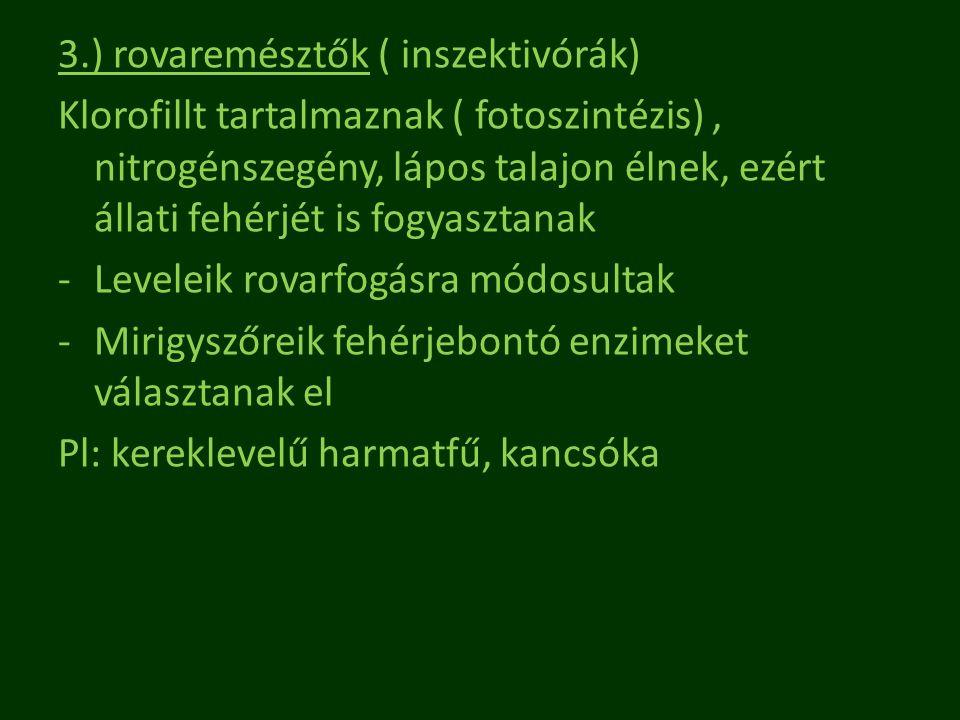 3.) rovaremésztők ( inszektivórák)