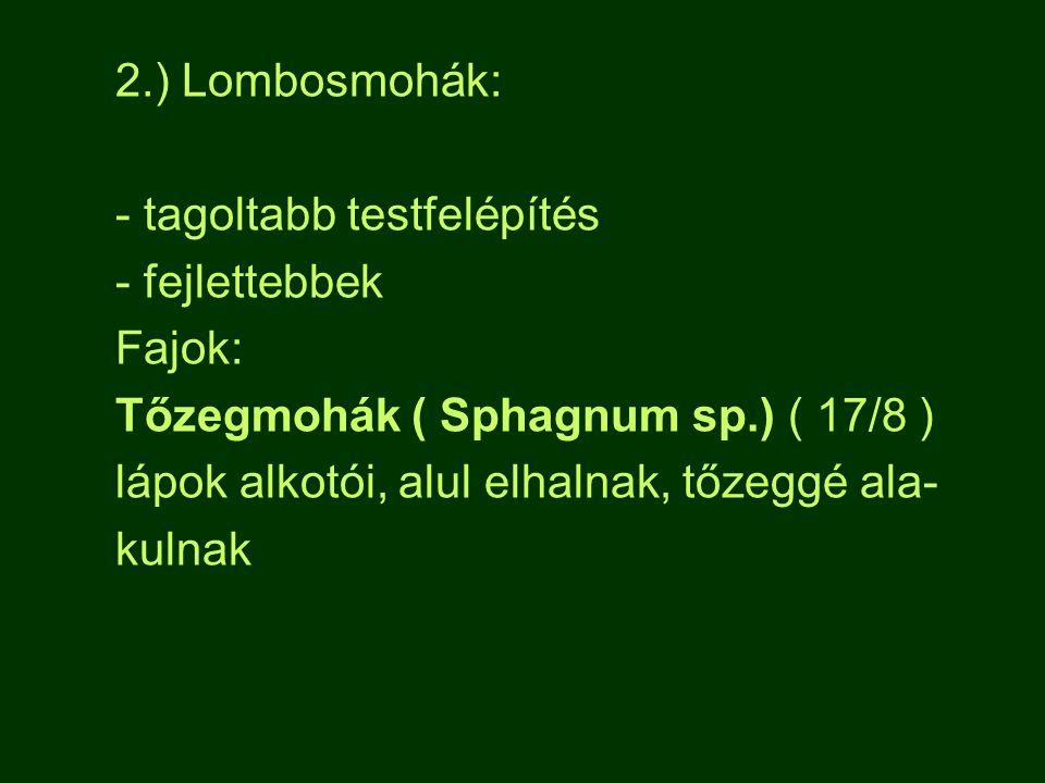 2.) Lombosmohák: - tagoltabb testfelépítés. - fejlettebbek. Fajok: Tőzegmohák ( Sphagnum sp.) ( 17/8 )