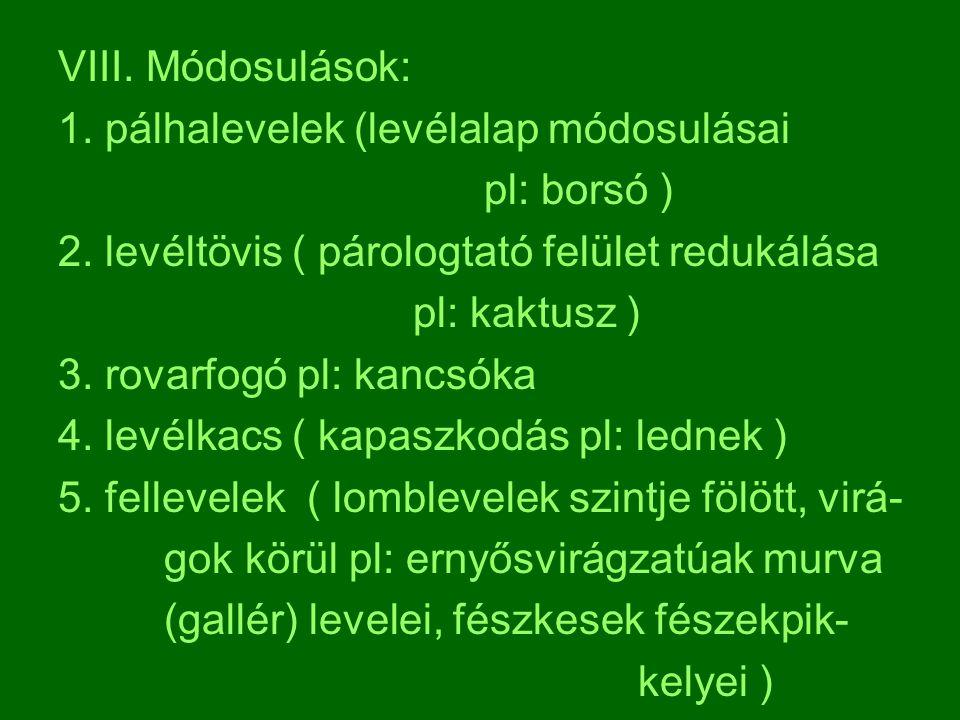 VIII. Módosulások: 1. pálhalevelek (levélalap módosulásai. pl: borsó ) 2. levéltövis ( párologtató felület redukálása.