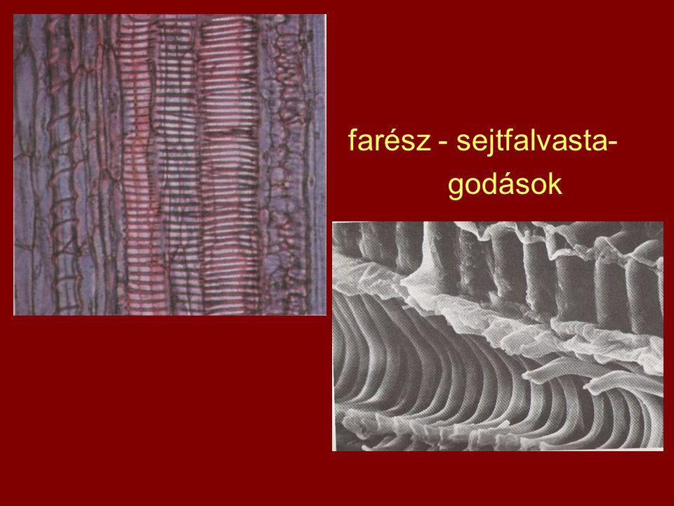farész - sejtfalvasta-