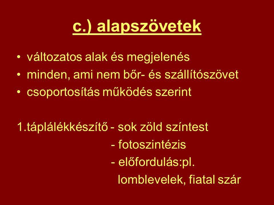 c.) alapszövetek változatos alak és megjelenés