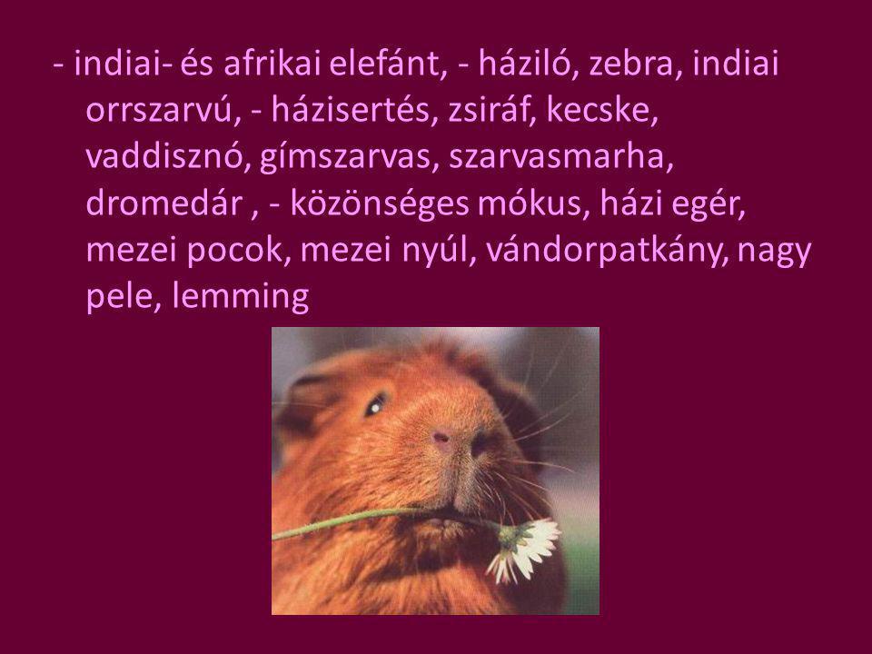 - indiai- és afrikai elefánt, - háziló, zebra, indiai orrszarvú, - házisertés, zsiráf, kecske, vaddisznó, gímszarvas, szarvasmarha, dromedár , - közönséges mókus, házi egér, mezei pocok, mezei nyúl, vándorpatkány, nagy pele, lemming