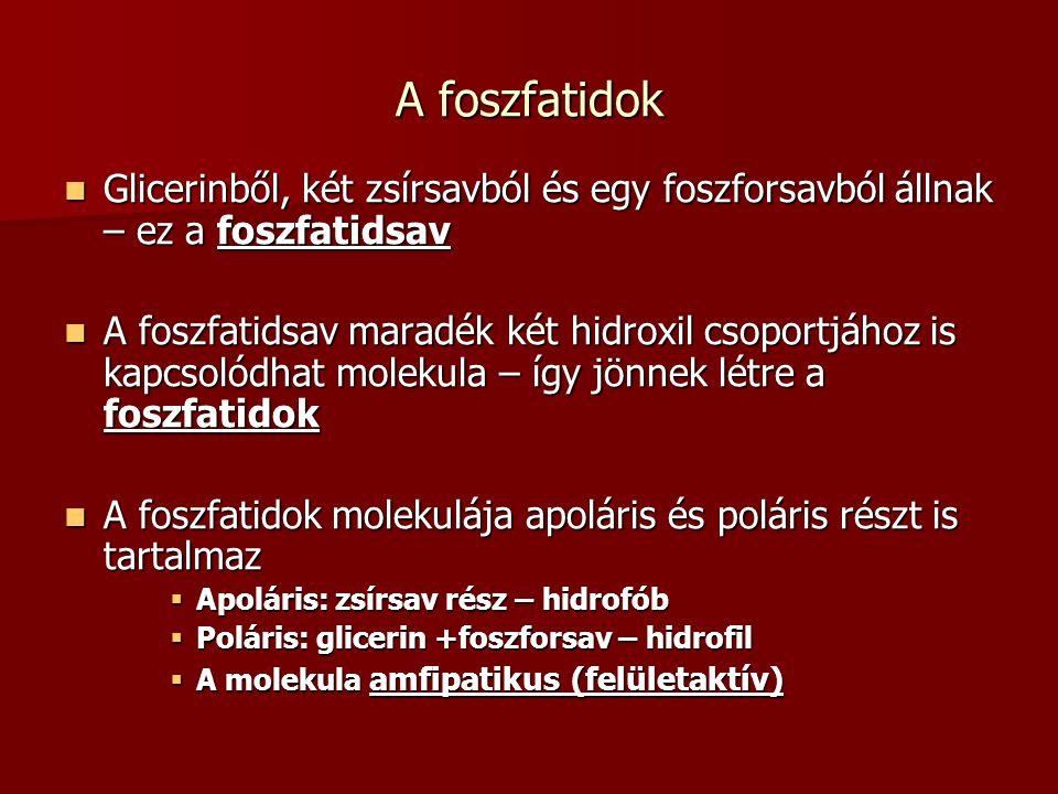 A foszfatidok Glicerinből, két zsírsavból és egy foszforsavból állnak – ez a foszfatidsav.