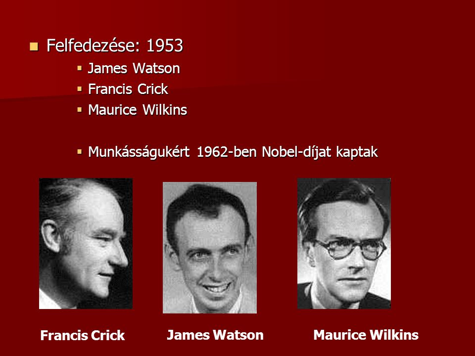 Felfedezése: 1953 James Watson Francis Crick Maurice Wilkins