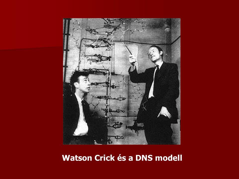 Watson Crick és a DNS modell