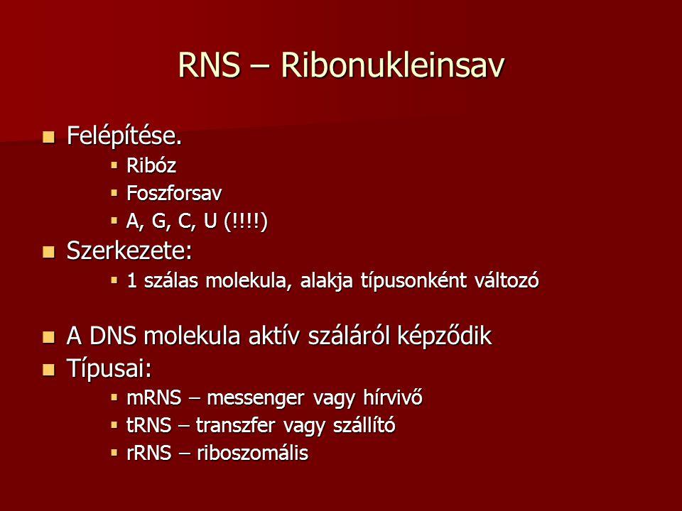 RNS – Ribonukleinsav Felépítése. Szerkezete: