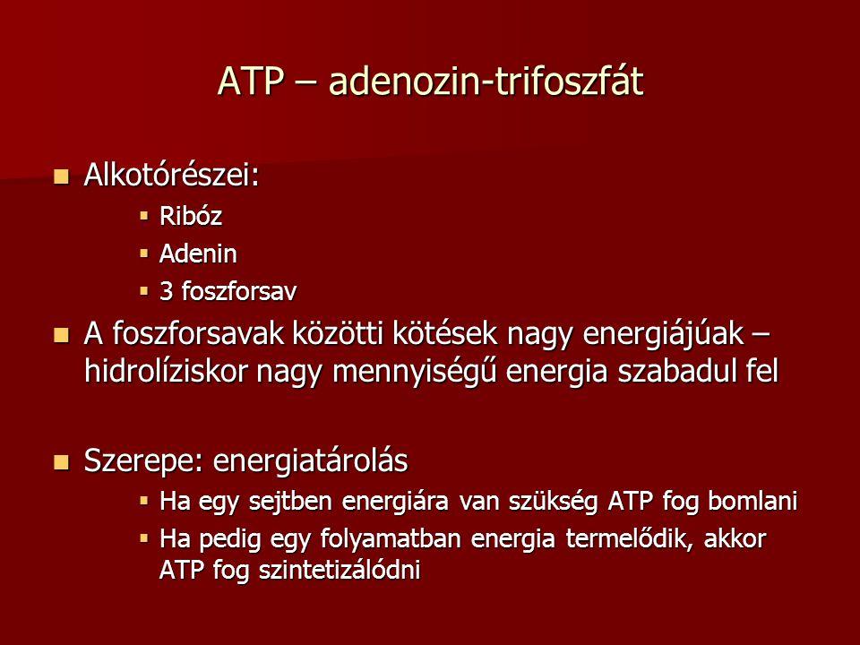 ATP – adenozin-trifoszfát