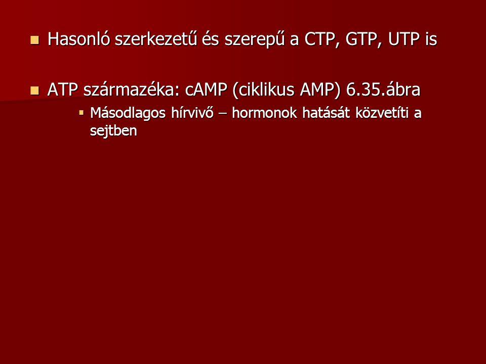 Hasonló szerkezetű és szerepű a CTP, GTP, UTP is