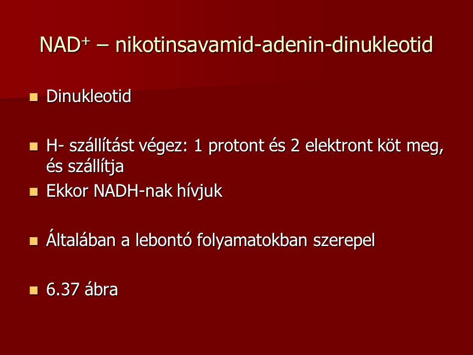 NAD+ – nikotinsavamid-adenin-dinukleotid