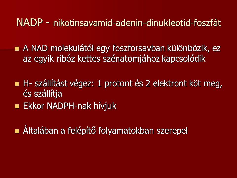 NADP - nikotinsavamid-adenin-dinukleotid-foszfát