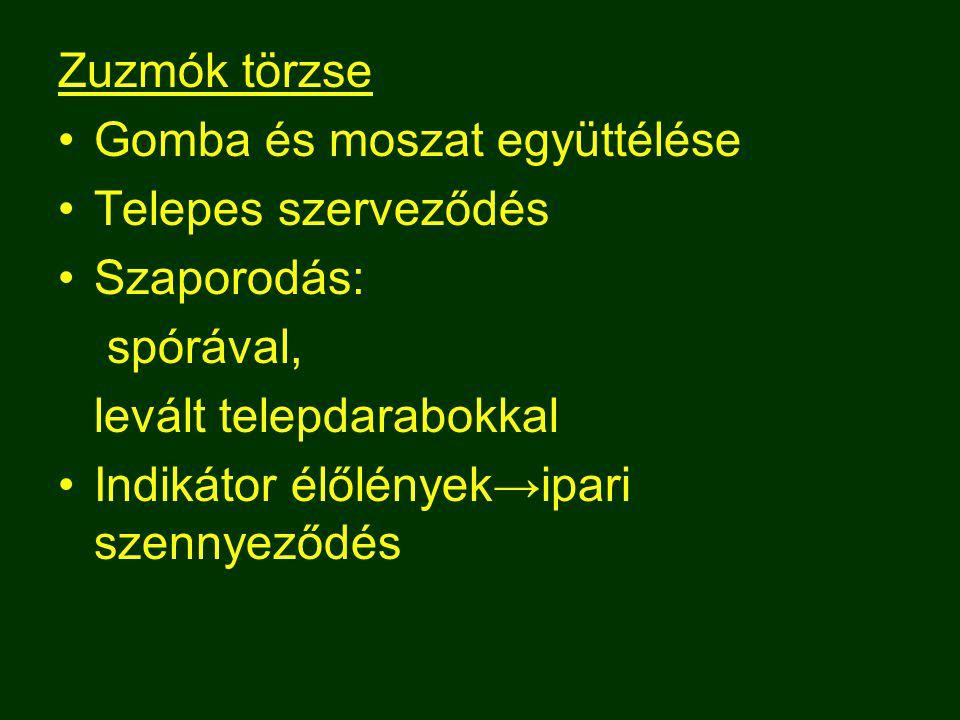 Zuzmók törzse Gomba és moszat együttélése. Telepes szerveződés. Szaporodás: spórával, levált telepdarabokkal.
