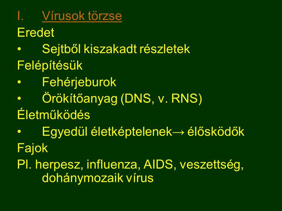 Vírusok törzse Eredet. Sejtből kiszakadt részletek. Felépítésük. Fehérjeburok. Örökítőanyag (DNS, v. RNS)