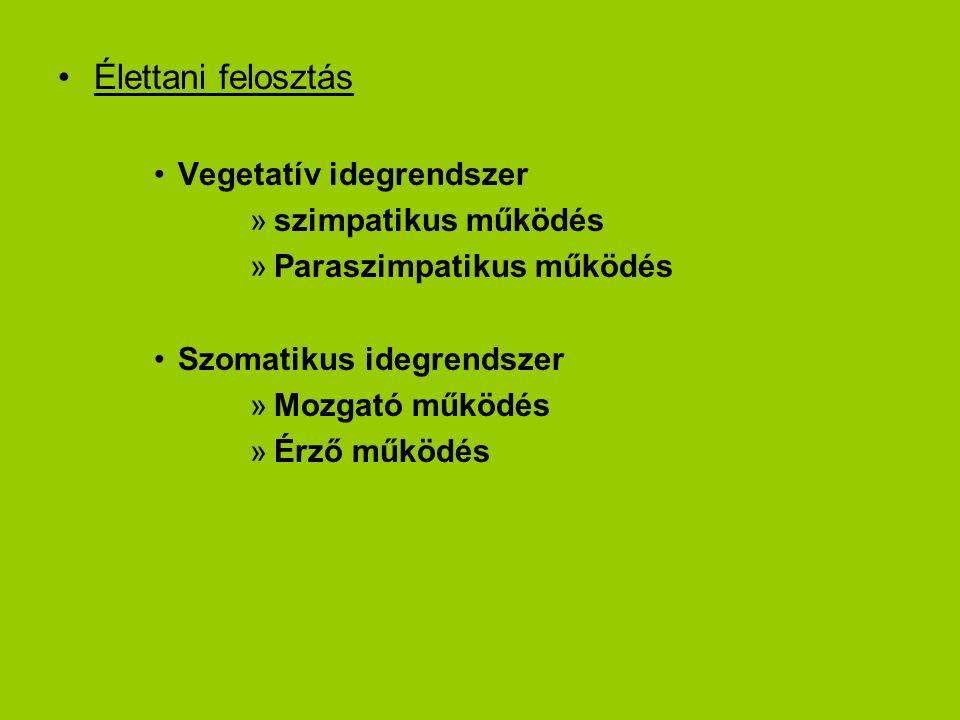 Élettani felosztás Vegetatív idegrendszer szimpatikus működés