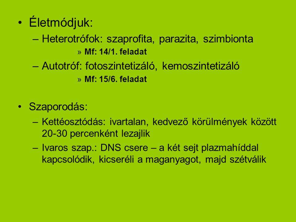 Életmódjuk: Heterotrófok: szaprofita, parazita, szimbionta