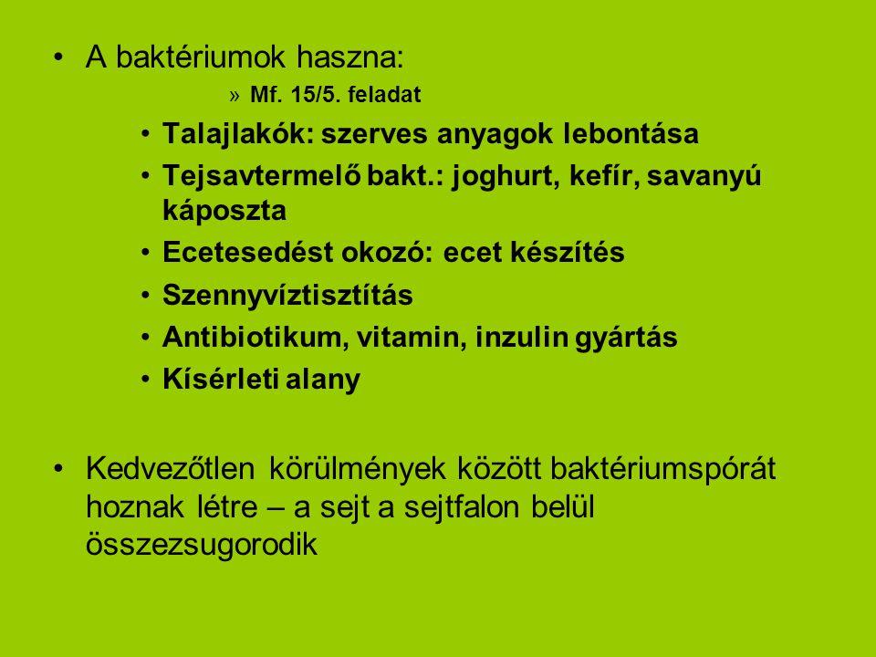 A baktériumok haszna: Mf. 15/5. feladat. Talajlakók: szerves anyagok lebontása. Tejsavtermelő bakt.: joghurt, kefír, savanyú káposzta.