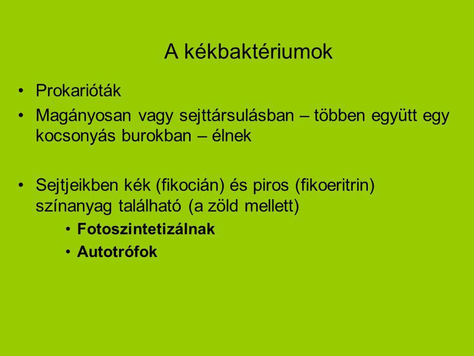 A kékbaktériumok Prokarióták