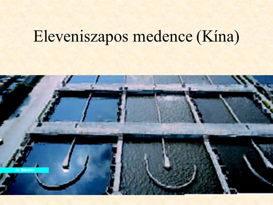 Eleveniszapos medence (Kína)