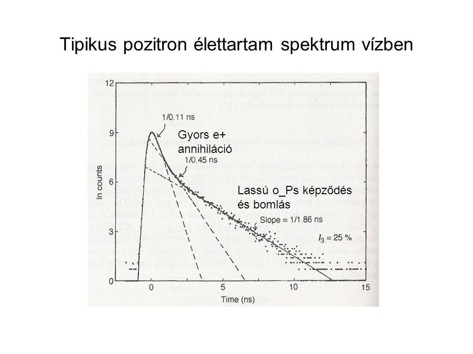 Tipikus pozitron élettartam spektrum vízben