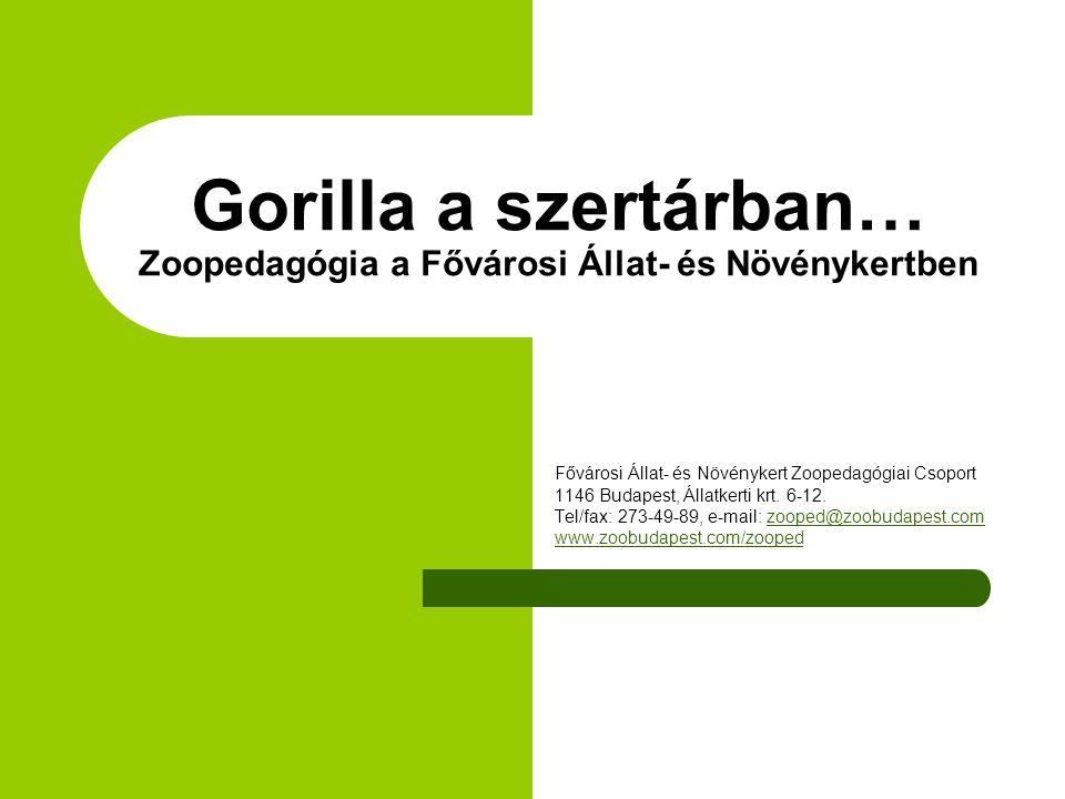 Gorilla a szertárban… Zoopedagógia a Fővárosi Állat- és Növénykertben