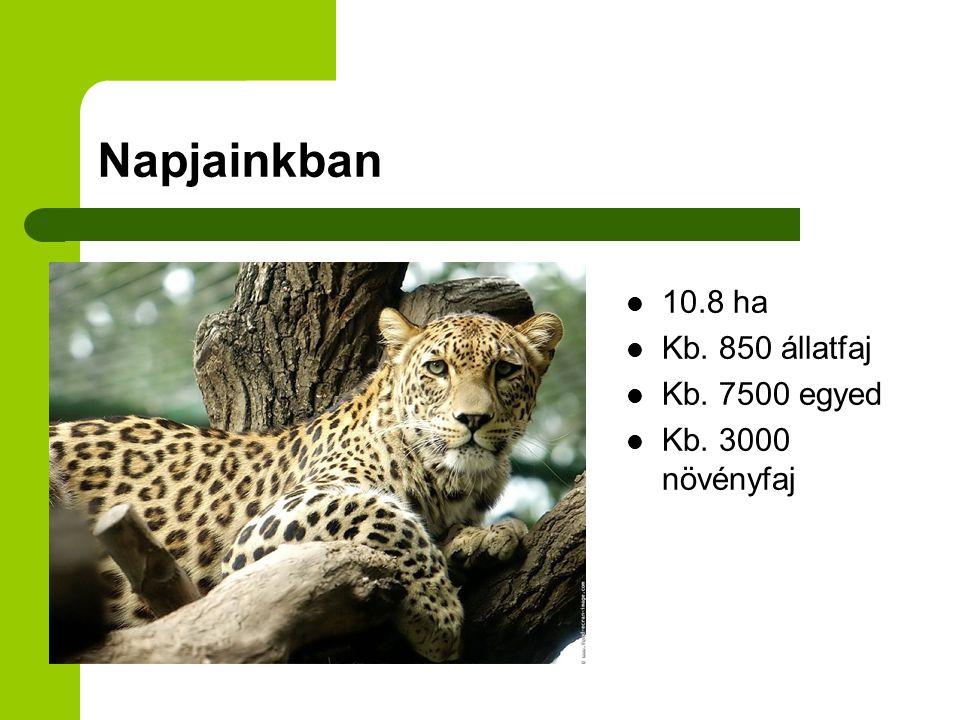 Napjainkban 10.8 ha Kb. 850 állatfaj Kb. 7500 egyed Kb. 3000 növényfaj