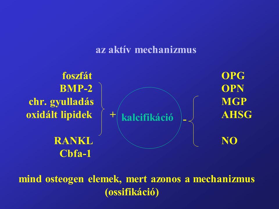 mind osteogen elemek, mert azonos a mechanizmus