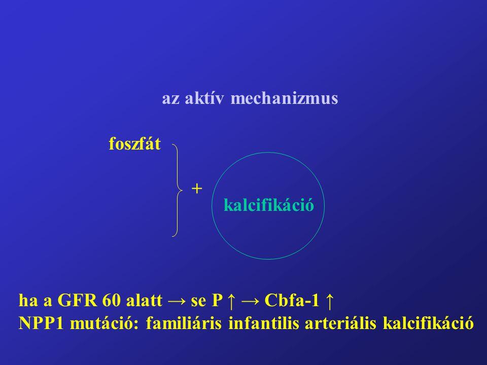 az aktív mechanizmus foszfát +