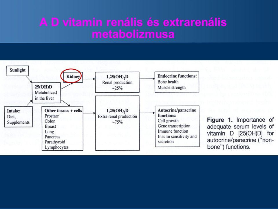 A D vitamin renális és extrarenális metabolizmusa