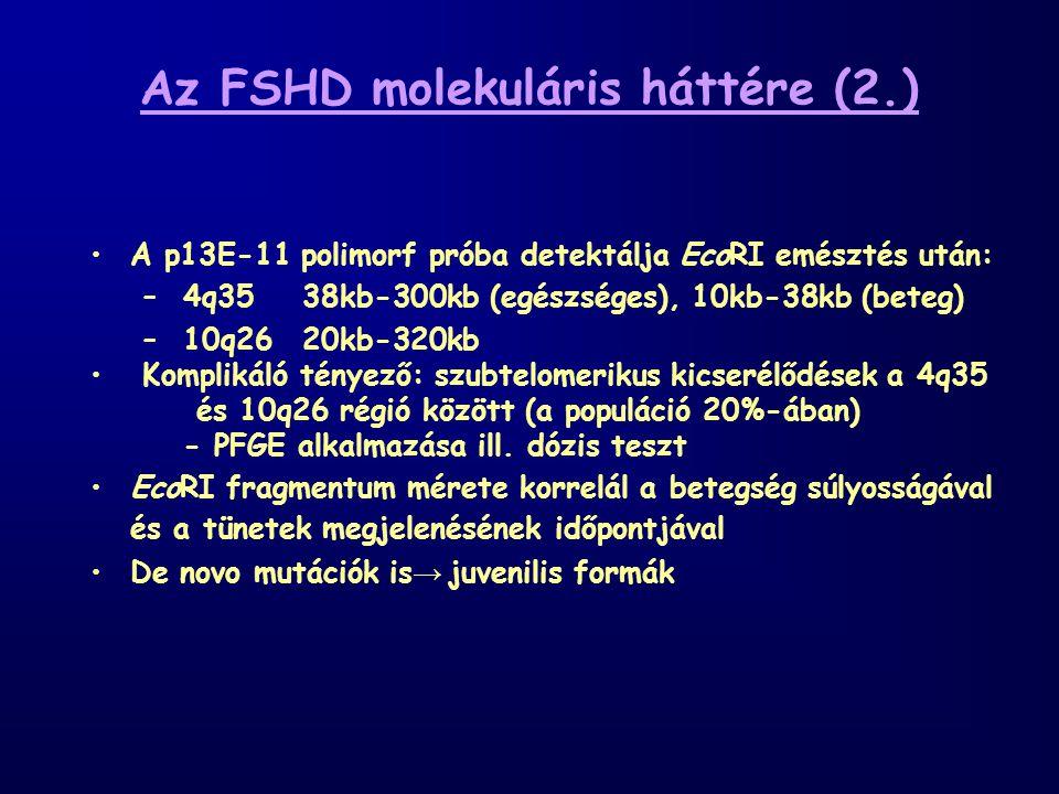 Az FSHD molekuláris háttére (2.)