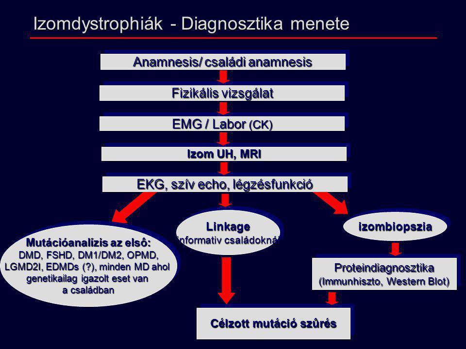 Célzott mutáció szûrés Mutációanalízis az elsô: