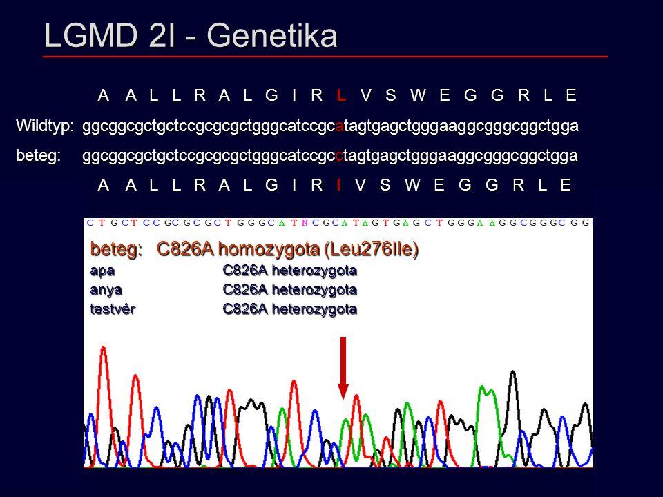 LGMD 2I - Genetika beteg: C826A homozygota (Leu276Ile)