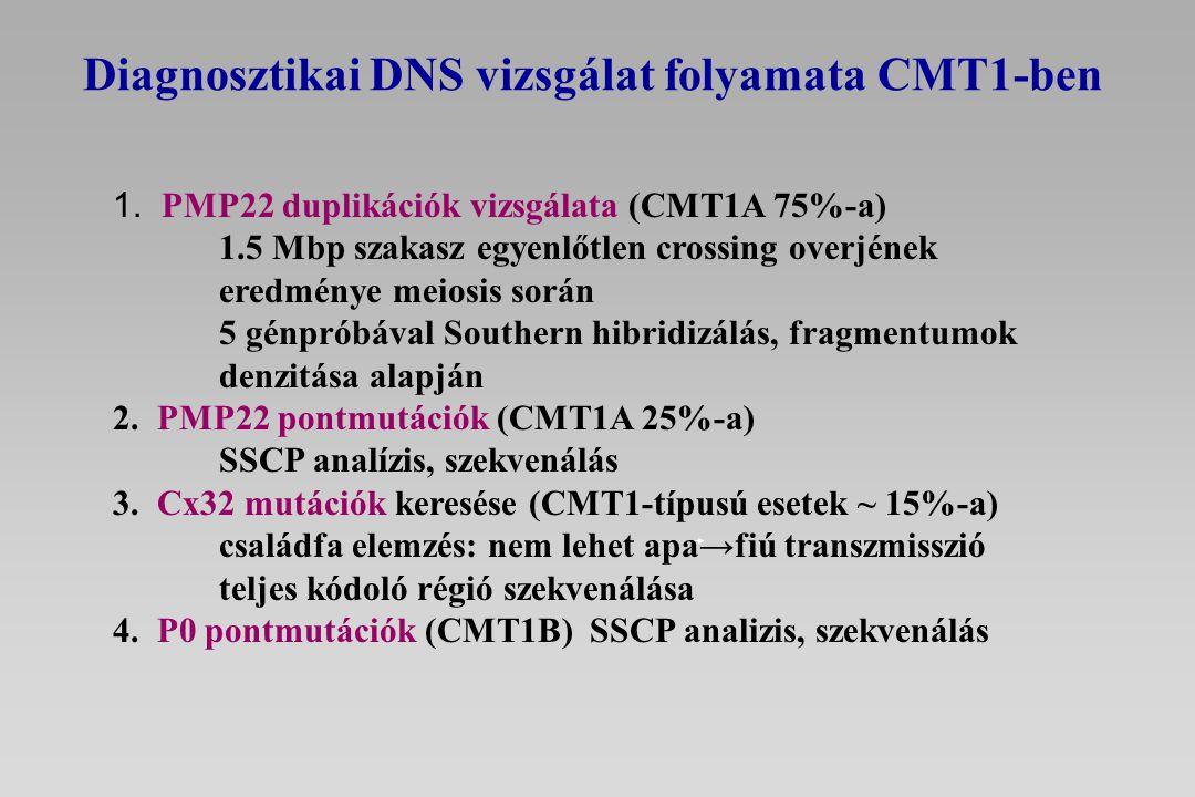 Diagnosztikai DNS vizsgálat folyamata CMT1-ben