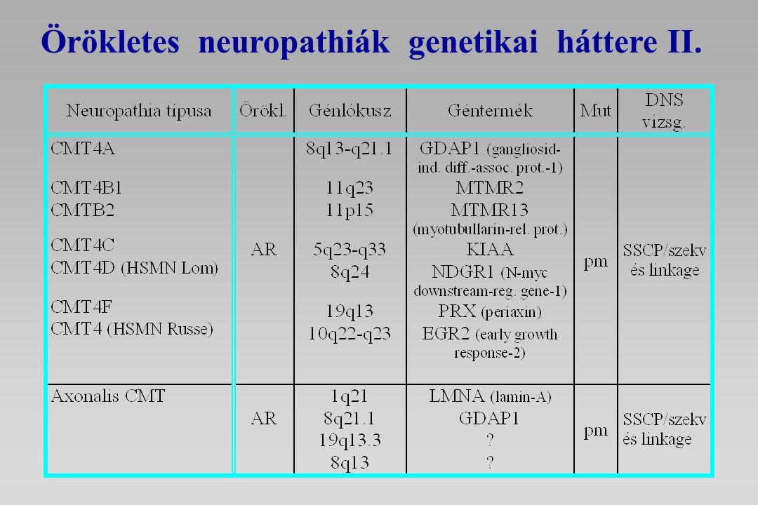 Örökletes neuropathiák genetikai háttere II.