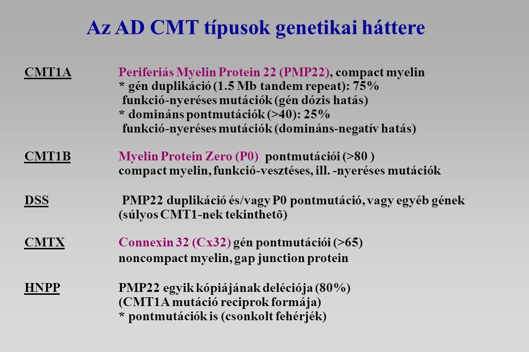 Az AD CMT típusok genetikai háttere