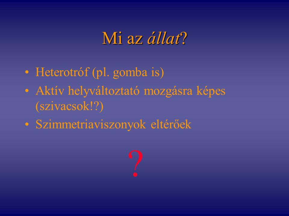 Mi az állat Heterotróf (pl. gomba is)
