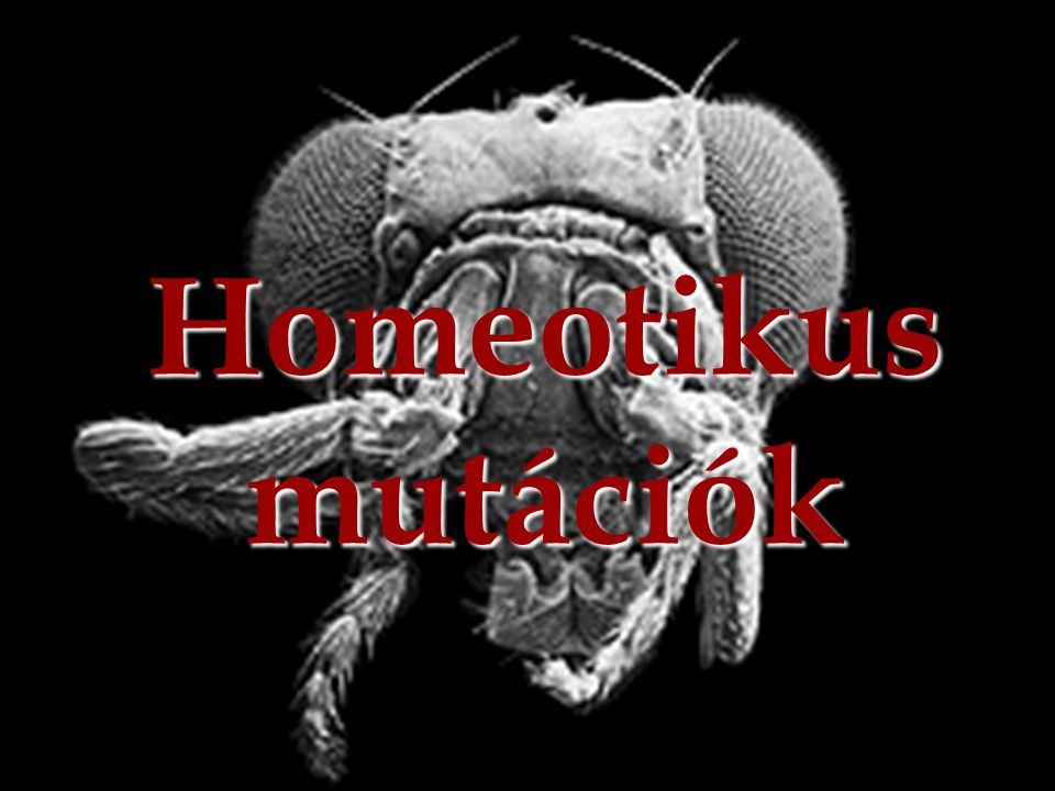 Homeotikus mutációk