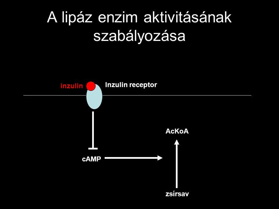 A lipáz enzim aktivitásának szabályozása