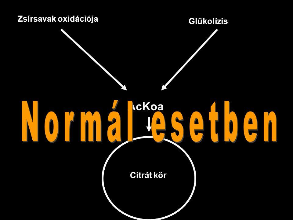 Zsírsavak oxidációja Glükolízis AcKoa Normál esetben Citrát kör