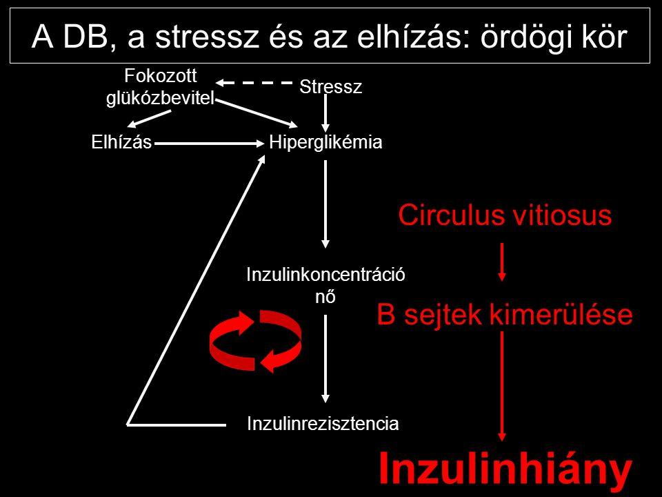 A DB, a stressz és az elhízás: ördögi kör