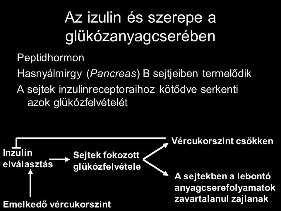 Az izulin és szerepe a glükózanyagcserében