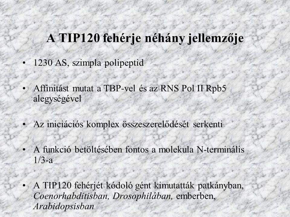 A TIP120 fehérje néhány jellemzője