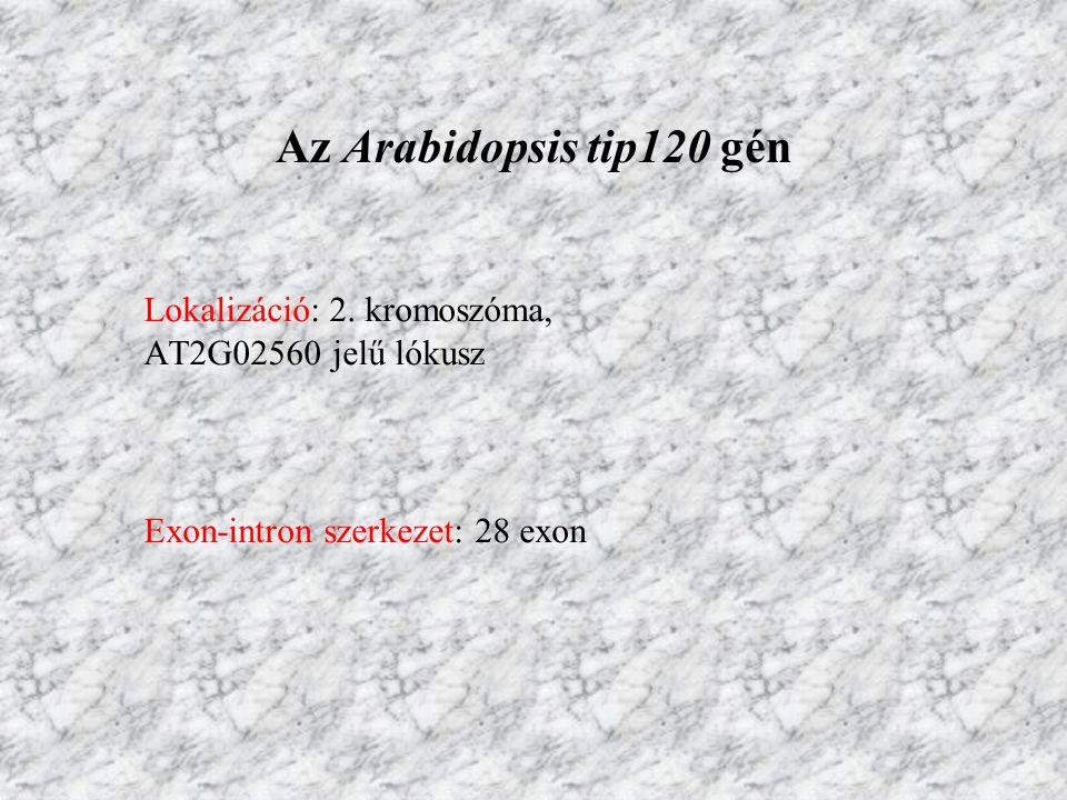 Az Arabidopsis tip120 gén Exon-intron szerkezet: 28 exon